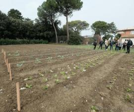 Cеминар по организации сетевого эксперимента «Сортоизучение арбуза»